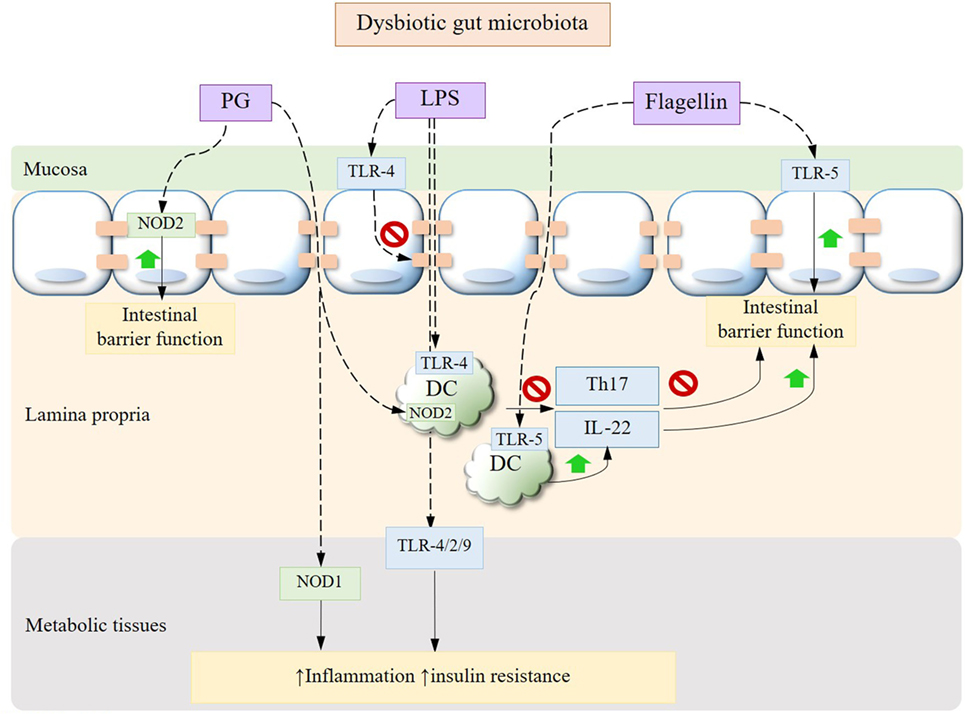 dysbiosis of gut microbiota)