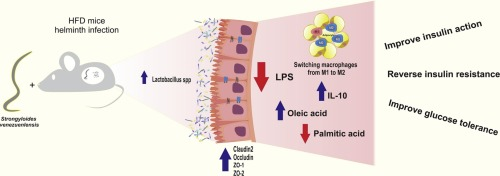 helminth infection and cancer