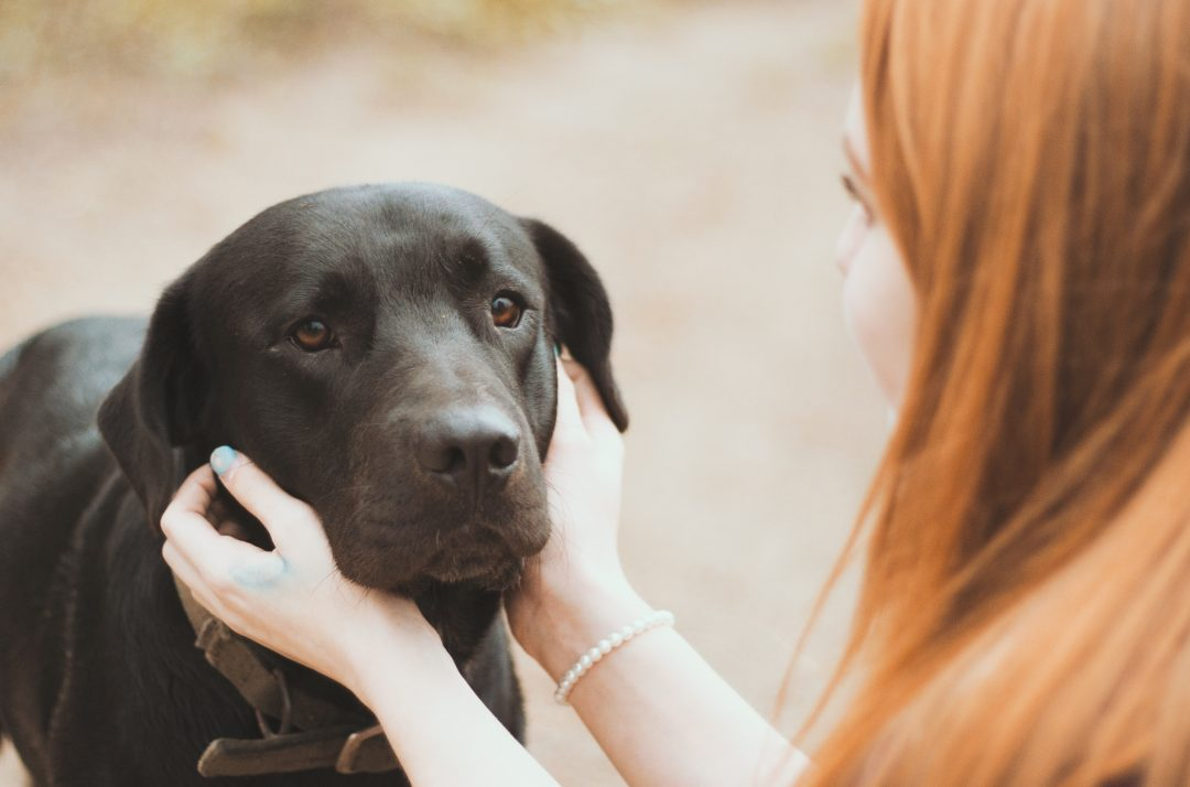 Living with Dogs Despite Your Pet Allergies | Hill's Pet