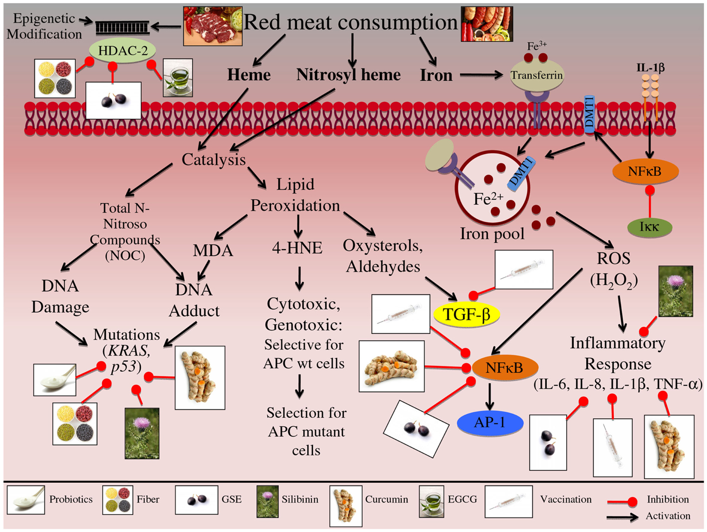 colorectal cancer and red meat
