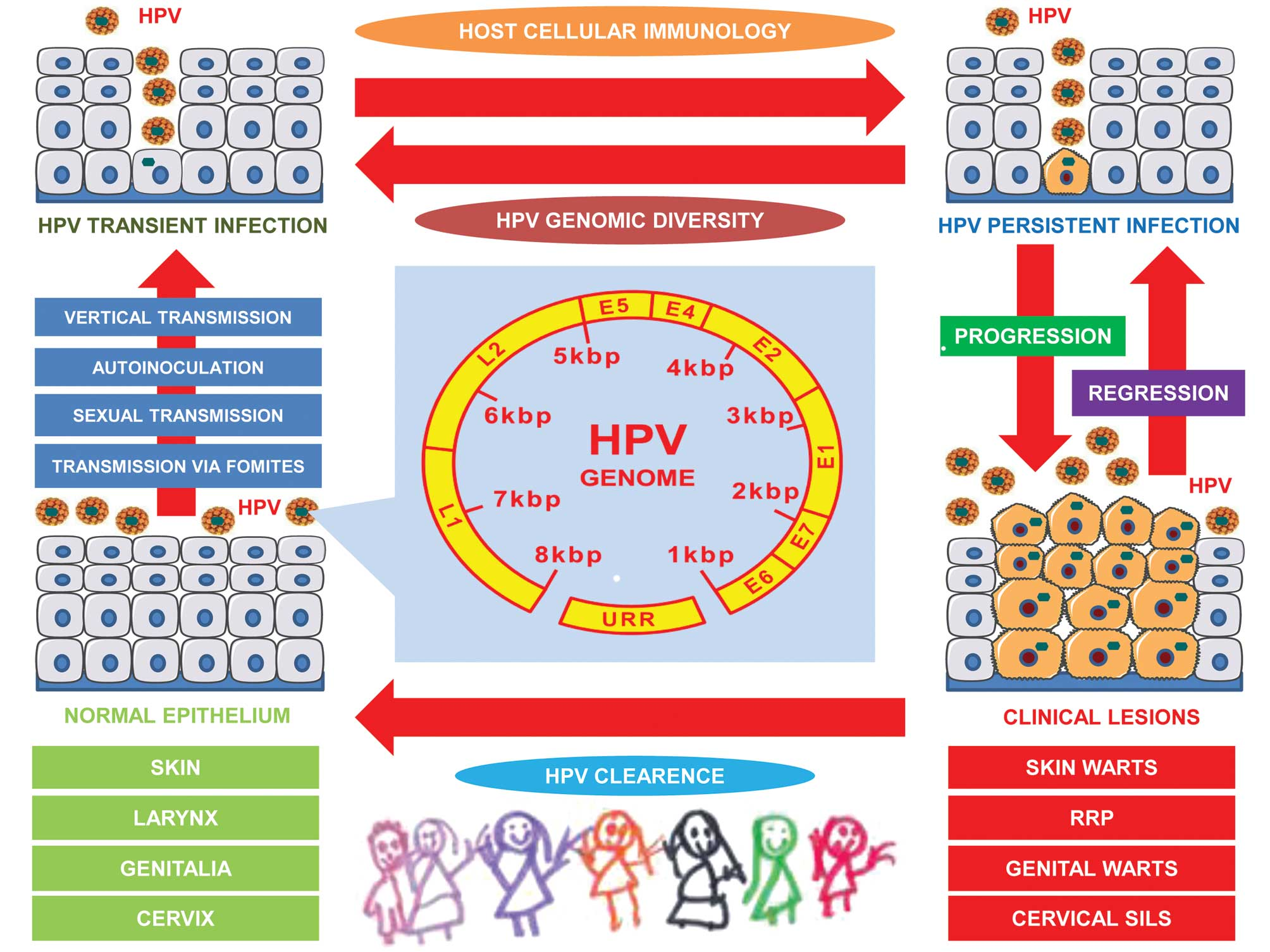 Hpv infection and cervical disease a review - Hpv and cancer review