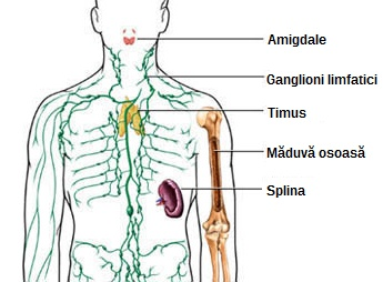 cancerul ganglionilor limfatici hpv vaccine for males