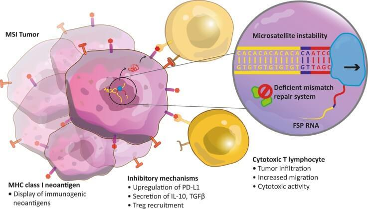peritoneal cancer and immunotherapy)