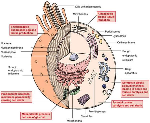 anthelmintic science definition)