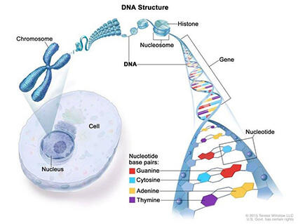 Cancer genetic or not, Cancer is genetic but not inherited