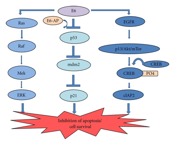 hpv virus and lung cancer)
