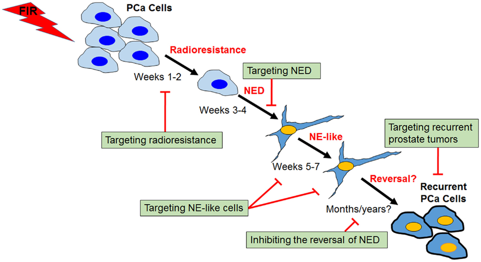 neuroendocrine cancer recurrence)